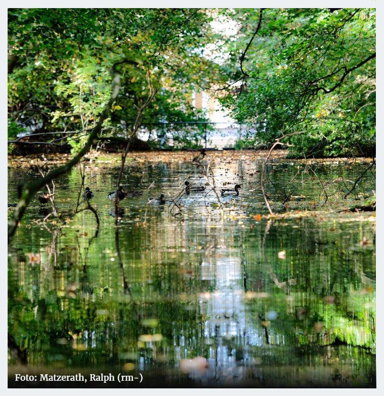 Leverkusener Schloss-Teich indem sich der der angrenzende Wald darin wiederspiegelt